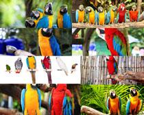 聪明的鹦鹉鸟摄影高清图片