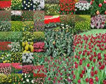 含苞未放色彩花朵攝影高清圖片