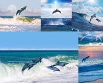 跳跃的海豚摄影时时彩娱乐网站