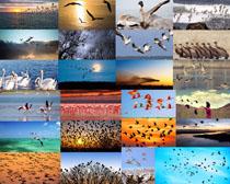 鹅与鹤动物摄影高清图片