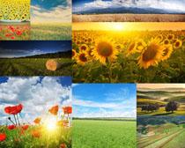 花草美丽风景摄影高清图片