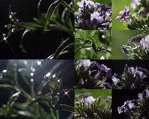 夜色中的花朵攝影高清圖片
