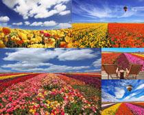 美麗的鮮花與云朵攝影高清圖片