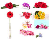 紅色花朵寫真攝影高清圖片