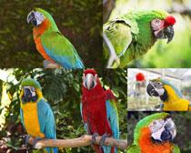 鹦鹉鸟拍摄摄影高清图片