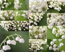 露水與花朵攝影高清圖片