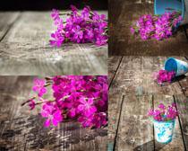 粉紅色的小花朵攝影高清圖片