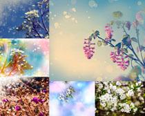 春天的花朵攝影高清圖片