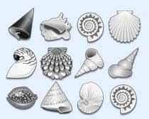 黑白色的贝壳图标PNG图片素材
