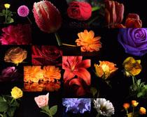 水珠與花朵攝影高清圖片
