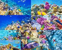 海底鱼类摄影高清图片