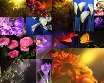 各種花朵與水珠攝影高清圖片