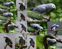 树枝上的鹦鹉鸟摄影高清图片