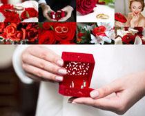 浪漫的情人節花朵攝影高清圖片