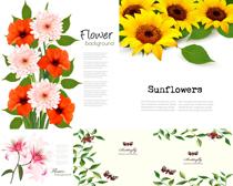 向日葵花和植物时时彩平台娱乐