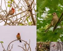 树枝上的飞鸟摄影时时彩娱乐网站