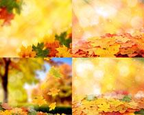 秋天落葉拍攝高清圖片