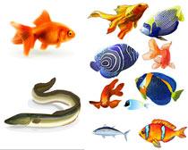 海洋水中鱼金鱼矢量素材