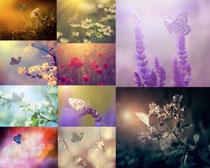 夢幻的花朵與蝴蝶攝影高清圖片