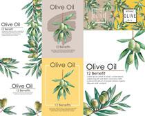 橄榄果封面设计高清图片