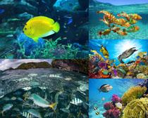 海底世界鱼类摄影时时彩娱乐网站