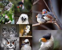 树枝鸟类摄影时时彩娱乐网站