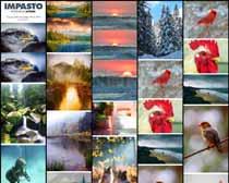 数码照片转艺术油画效果PS动作