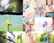 漂亮的鹦鹉摄影时时彩娱乐网站