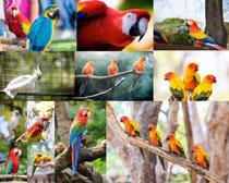 色彩鹦鹉摄影时时彩娱乐网站