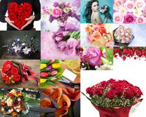 鮮花禮物攝影高清圖片