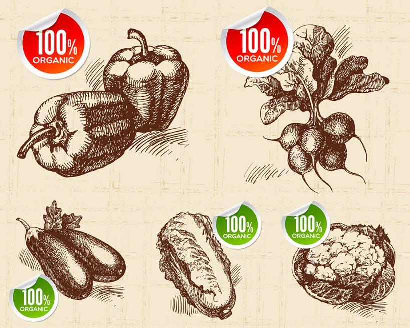 素材手绘素描黑白辣椒茄子大白菜甜菜花菜蔬菜标签