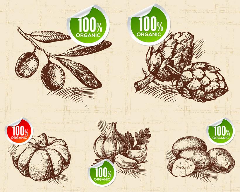 手绘蔬菜土豆矢量素材