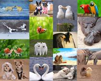 情侣动物摄影时时彩娱乐网站