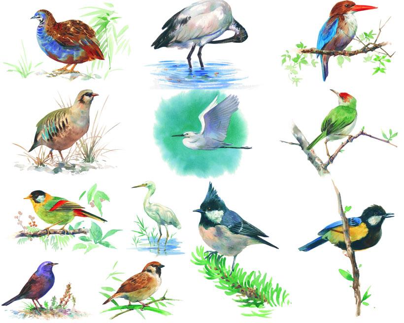 水墨鸟类画摄影高清图片