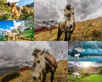 毛驴与马摄影时时彩娱乐网站