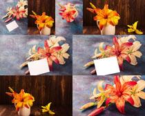 靜態的花朵攝影高清圖片