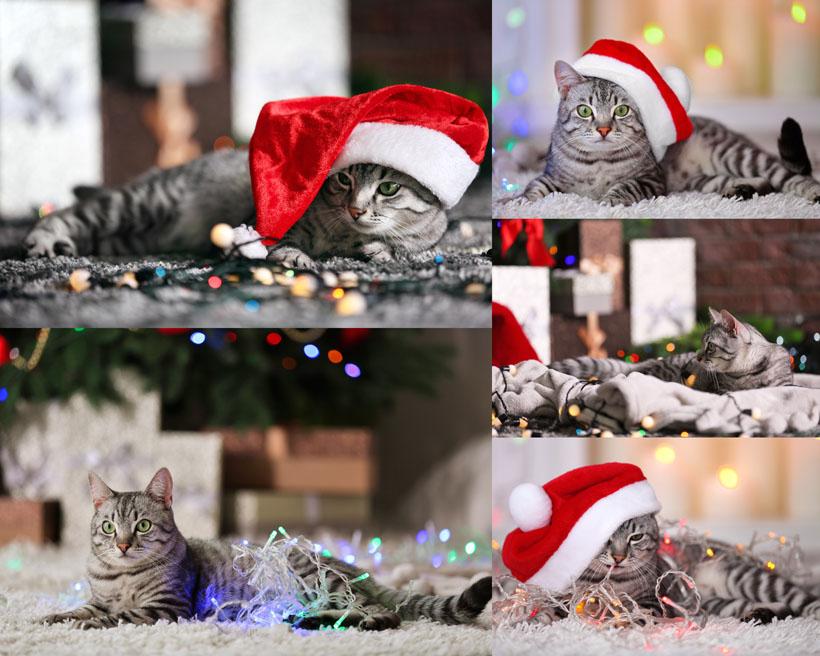 圣诞猫咪摄影时时彩娱乐网站