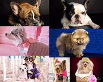 可爱外国狗狗摄影时时彩娱乐网站