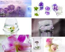 冰塊與花朵攝影高清圖片