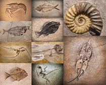 动物化石摄影时时彩娱乐网站