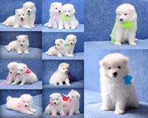 可爱的小狗写真摄影时时彩娱乐网站