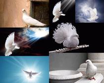 白鸽子摄影时时彩娱乐网站