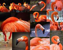 丹顶鹤动物摄影时时彩娱乐网站