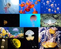 海底水母摄影时时彩娱乐网站
