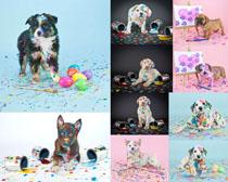 色彩油漆与狗狗摄影时时彩娱乐网站