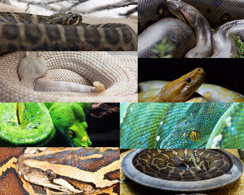 毒蛇花蛇动物冬眠拍