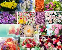 美麗的花朵拍攝高清圖片