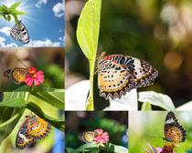 美丽的彩色蝴蝶摄影时时彩娱乐网站