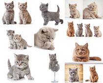 可爱猫咪咪摄影时时彩娱乐网站