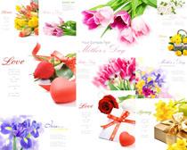 美麗的禮物花朵攝影高清圖片
